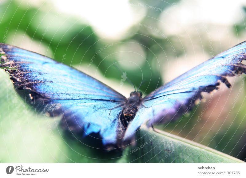 blue port Natur blau Pflanze grün schön Sommer Baum Erholung Blatt Tier Frühling Wiese Garten außergewöhnlich fliegen Park