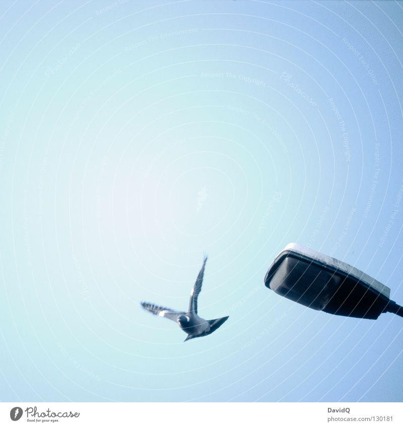 eagle of potsdam Taube Laterne Lampe Licht Beginn Flügel Feder Vogel Luft Symbole & Metaphern sehr wenige Frieden Luftverkehr fliegen Himmel frei Freiheit