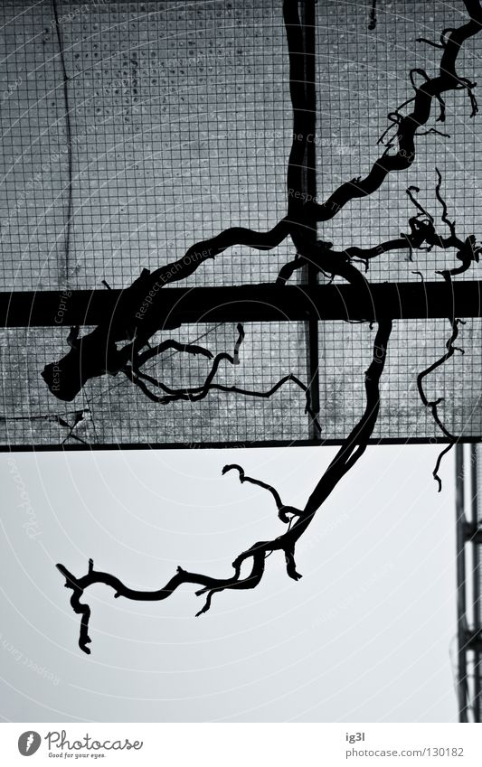 bliCklENkUNg Muster Pflanze Reifezeit Geäst Geometrie ausrichten Bildaufbau chaotisch Farbton Partnerschaft diagonal verschmelzen Zusammensein Hintergrundbild