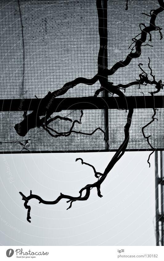 bliCklENkUNg Natur Pflanze Zusammensein Kraft Architektur Hintergrundbild Perspektive Wachstum Konzentration Partnerschaft diagonal Geometrie chaotisch