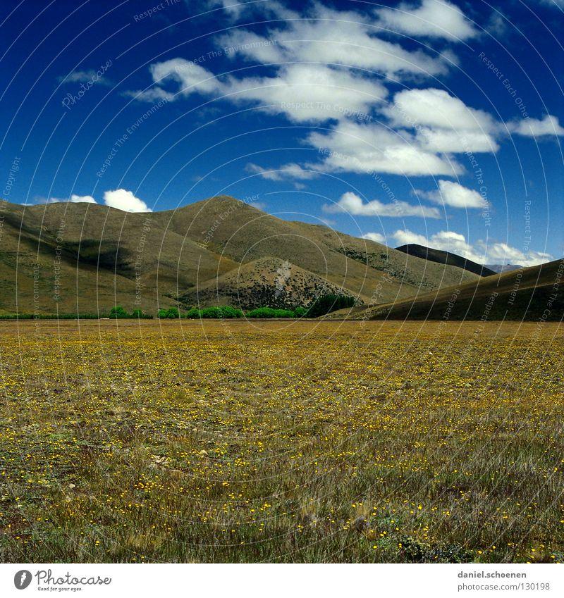 Himmel über Neuseeland Natur Himmel weiß Blume grün blau Sommer Ferien & Urlaub & Reisen ruhig Wolken Einsamkeit gelb Ferne Wiese Berge u. Gebirge Frühling