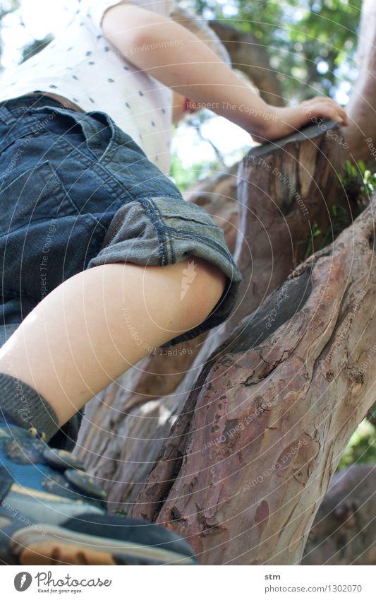 Abenteuer Mensch Kind Natur Sommer Baum Leben Bewegung natürlich Junge Sport Spielen Gesundheit Familie & Verwandtschaft Beine Garten Freizeit & Hobby