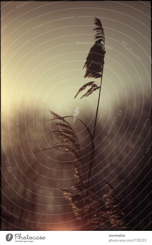 Prinzip Frühaufsteher Natur schön Meer Gefühle Küste See Luft Wind gold Nebel frisch Spiegel Schilfrohr Müdigkeit analog Geister u. Gespenster
