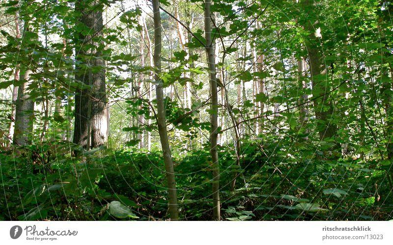 unterholz Blatt Wald Unterholz
