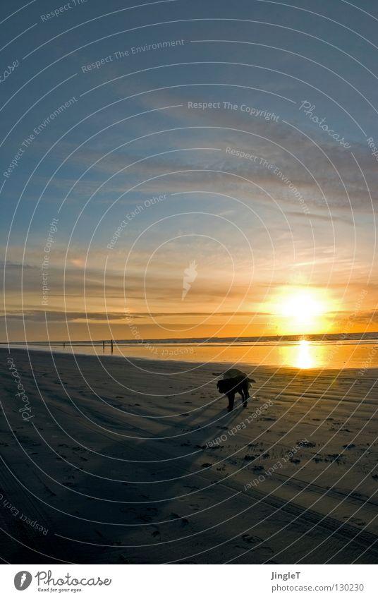 nicht allein Strand Küste See Meer Gewässer Meerwasser Gezeiten Ebbe Wolken braun schwarz Wellen Brandung Reflexion & Spiegelung Abenddämmerung Schatten Hund