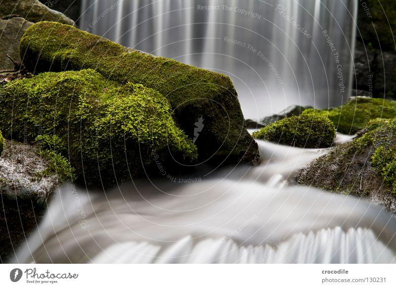 wasservorhang Bach Wasser bewachsen Wald Nebel nass Schwerkraft grün dunkel Langzeitbelichtung fließen Fluss fallen Wasserfall Felsen Stein Natur abstrakt