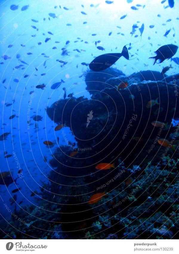 Bali Reef tauchen Meer Riff mehrfarbig Fisch Wasser Dive Ocean Blue Unterwasseraufnahme