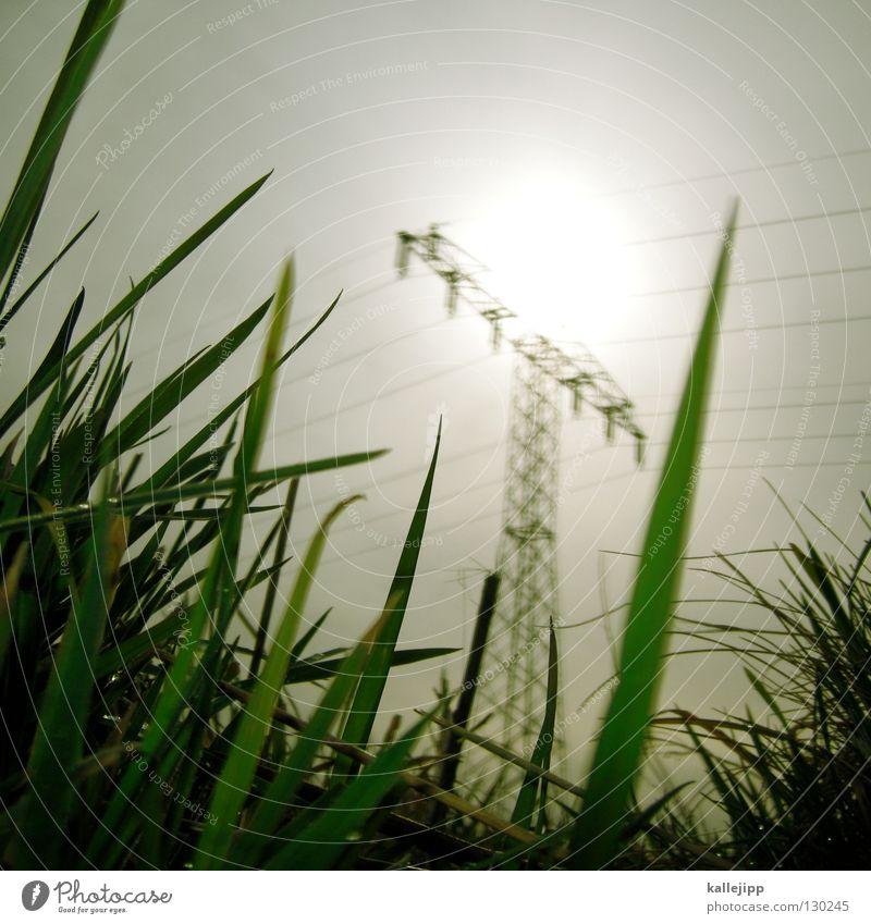 stromlieferant Elektrizität Energiewirtschaft nachhaltig Steinkohle Erneuerbare Energie Strommast Gras Wiese ökologisch Kuh elektronisch Biomasse