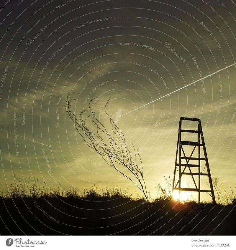 OUFF, THERE'S A LETTER FOR YOU! Holz Sonnenuntergang Gras Grasbüschel Horizont Blendeneffekt Flugzeug Idylle Quadrat Natur Sonnenblende Strahlung Überstrahlung
