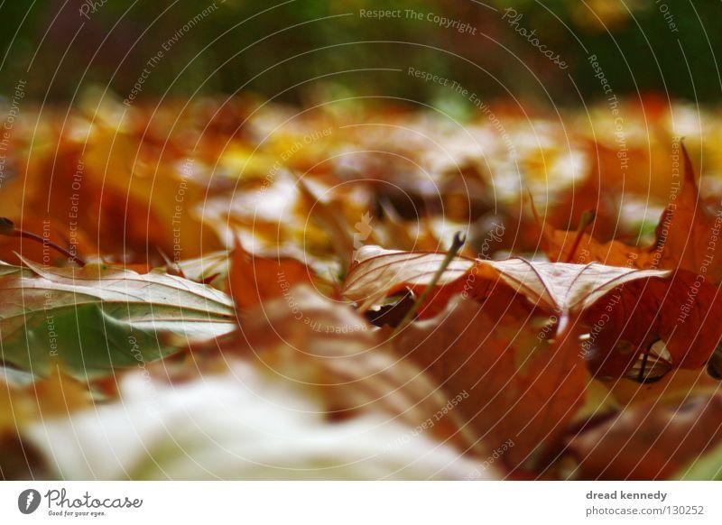 Blätterhaube Natur schön Baum Blatt ruhig Umwelt Straße Wiese Herbst Park Stimmung Feld natürlich wandern Ausflug ästhetisch