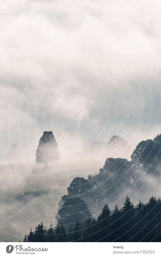 Herbstbeginn? Natur Landschaft Wolken Frühling Wetter schlechtes Wetter Nebel Pflanze Baum Wiese Wald Hügel gruselig trist trüb Wolkendecke Hochnebel Nebelbank