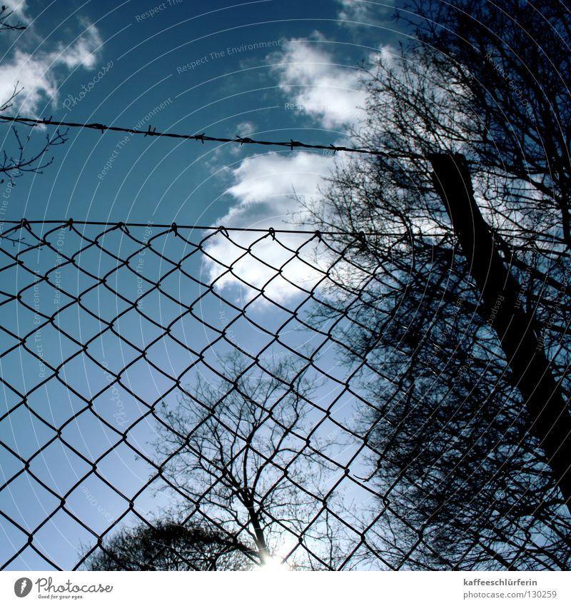 Durchblick Himmel weiß Baum blau Wolken Zaun Durchblick Stacheldraht