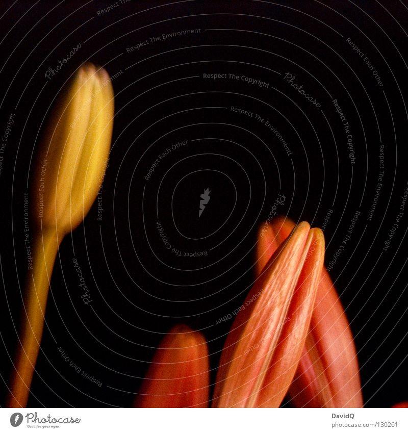 randgruppe vs. außenseiter Blume Blüte bedrohlich Kommunizieren Originalität Bündel Ausgrenzung Außenseiter ausgeschlossen verweigern Individualist Old Paria Interessengemeinschaft