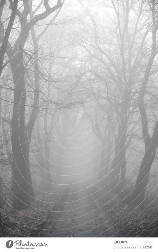 foggy woods #7 Natur Baum Winter Einsamkeit Wald dunkel kalt Traurigkeit Nebel nass Trauer Frost geheimnisvoll gefroren Verzweiflung