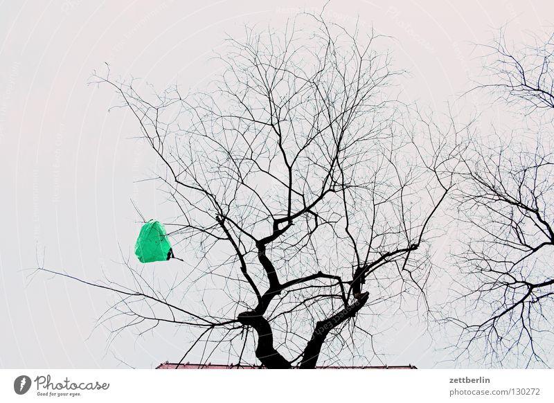 Frühlingstüte Baum Plastiktüte Froschperspektive gefangen Schmuck Dekoration & Verzierung Ast Zweig verfangen aufgehängt weihnachtsbaumersatz