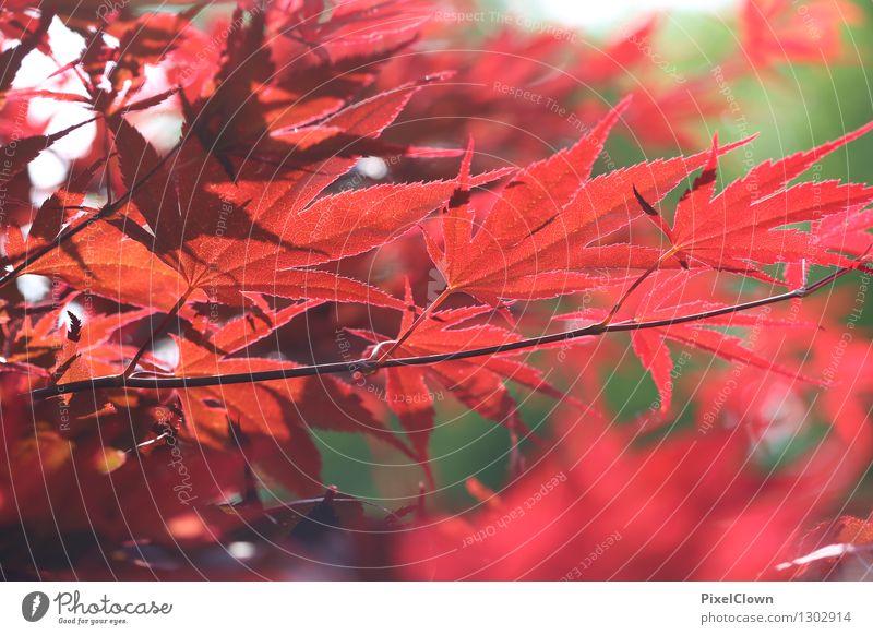 Blattwerk Natur Pflanze schön Baum rot Blatt Tier Wald Garten Lifestyle Stimmung Park träumen Zufriedenheit elegant Idylle