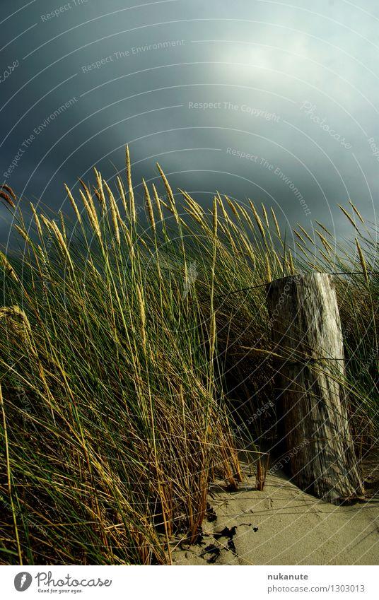 Ostseesommer Natur Landschaft Pflanze Sand Luft Himmel Sommer Klima Gewitter dünenpflanzen Küste Strand Düne leuchten bedrohlich natürlich blau braun grau grün