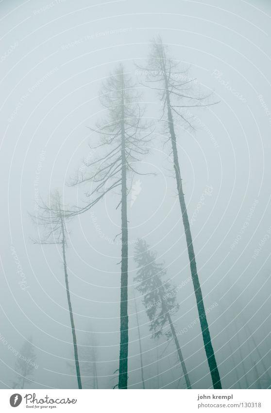 blair witch project pt I Nebel Baum Wald dunkel gruselig Geister u. Gespenster Tanne Fichte Vergänglichkeit kahlschlag grau grausen füchterlich aaargh Tod over