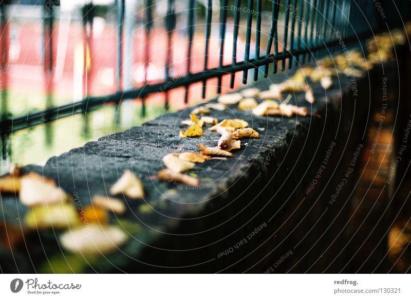 herbstauftakt Blatt Herbst Mauer Zaun