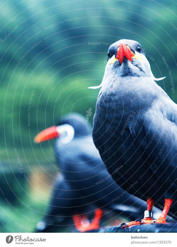 watbistndufürnvogel? Natur blau grün schön Sommer Erholung Tier Wald Frühling Auge lustig Garten außergewöhnlich fliegen Vogel Park