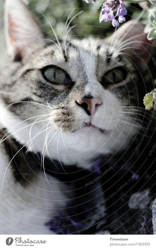 Und da sah er sie. Katze blau Pflanze grün weiß Blatt Tier schwarz Blüte natürlich Garten Irritation