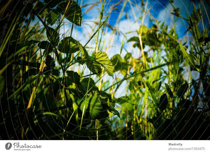 Blick vom Gras Sommer Garten Natur Landschaft Pflanze Himmel Wolken Blatt Wiese Wachstum frisch hell natürlich Sauberkeit wild blau grün Farbe Ackerbau