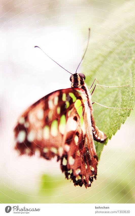 abhängen Natur Pflanze grün schön Baum Erholung Blatt Tier Auge Wiese klein Beine Garten außergewöhnlich fliegen braun