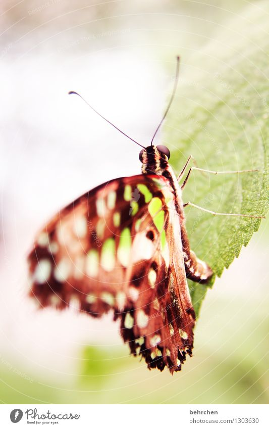 abhängen Natur Pflanze Tier Baum Sträucher Blatt Garten Park Wiese Wildtier Schmetterling Flügel Fühler Auge Beine 1 beobachten Erholung fliegen Fressen