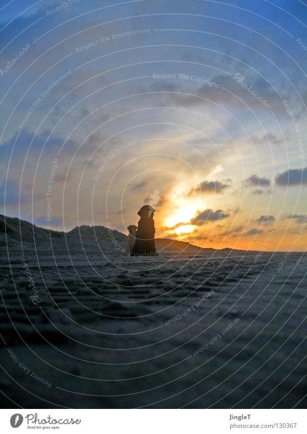 nicht allein II Strand Küste See Meer Gewässer Meerwasser Gezeiten Ebbe Wolken braun schwarz Wellen Brandung Reflexion & Spiegelung Abenddämmerung Schatten Hund