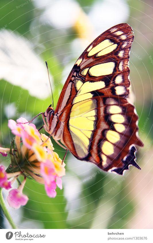 bang boom bang Natur Pflanze Tier Frühling Sommer Blume Blatt Blüte Garten Park Wiese Wildtier Schmetterling Flügel 1 beobachten Blühend Duft Erholung fliegen