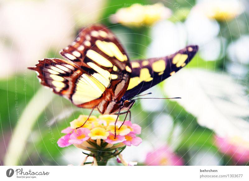 farbenfroh Natur Pflanze schön Blume Blatt Tier Blüte Wiese Beine Garten außergewöhnlich fliegen Park elegant Wildtier Sträucher
