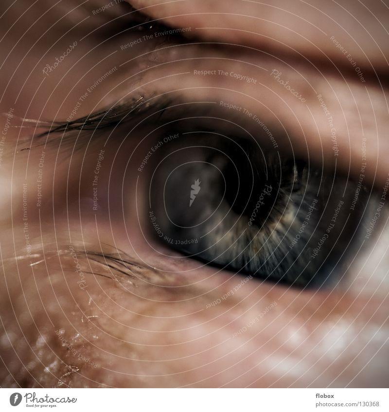 Body Parts 0 Pupille Wimpern Mensch Sinnesorgane Mann Trauer maskulin Langeweile Auge Regenbogenhaut Linse Müdigkeit schläfrig Haut Falte Blick weitsichtig