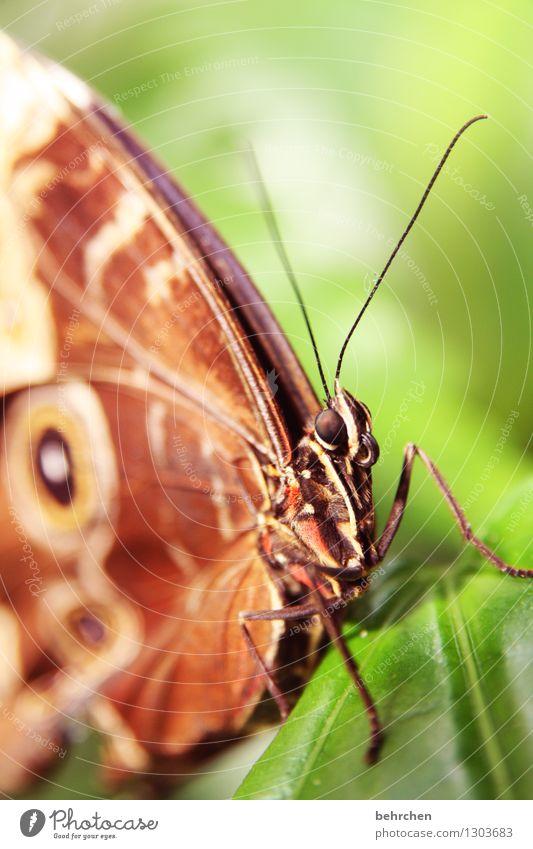glotzen Natur Pflanze Tier Frühling Sommer Schönes Wetter Baum Sträucher Blatt Garten Park Wiese Wildtier Schmetterling Tiergesicht Flügel 1 beobachten Erholung