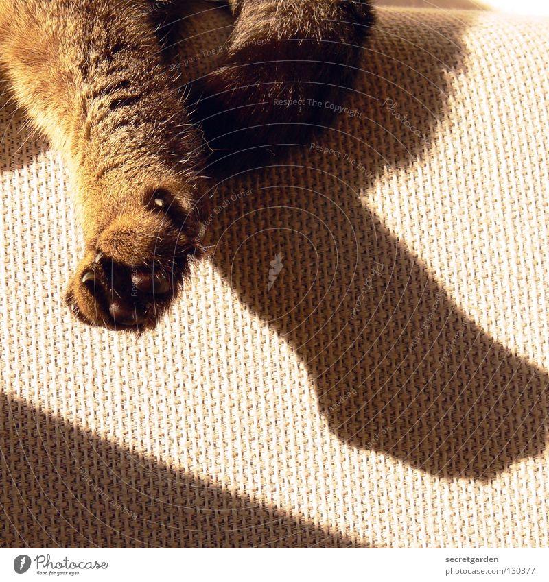 love cats Katze Sonne Sommer Tier ruhig Erholung grau Wärme warten liegen Platz verrückt Häusliches Leben Stoff Fernsehen Physik