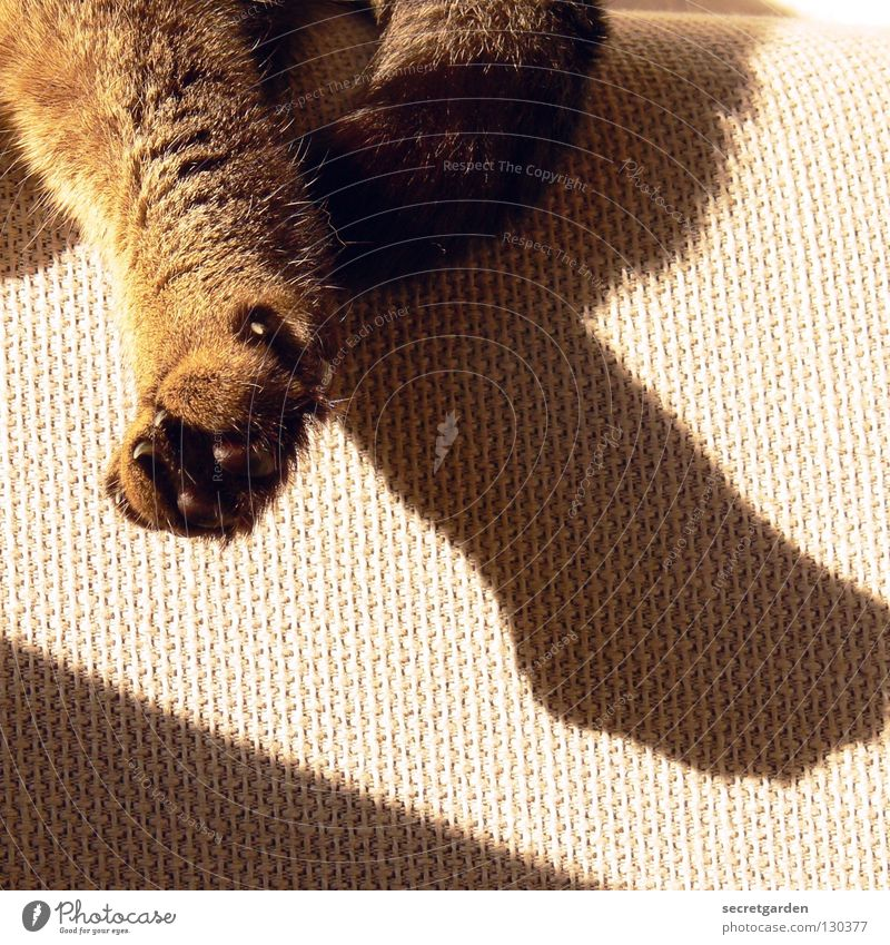 love cats Sofa Katze Tier Krallen Katzenpfote Pfote Erholung ausgestreckt hängen gestreift Stoff Physik kuschlig grau gemütlich lümmeln Fernsehen Material