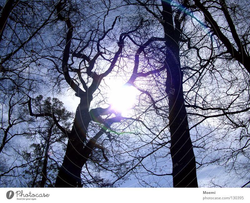 Siehst du die Sonne? Himmel Baum Freude Wolken Wald dunkel hell Ast Erfrischung blenden grell hell-blau Sommertag scheinend
