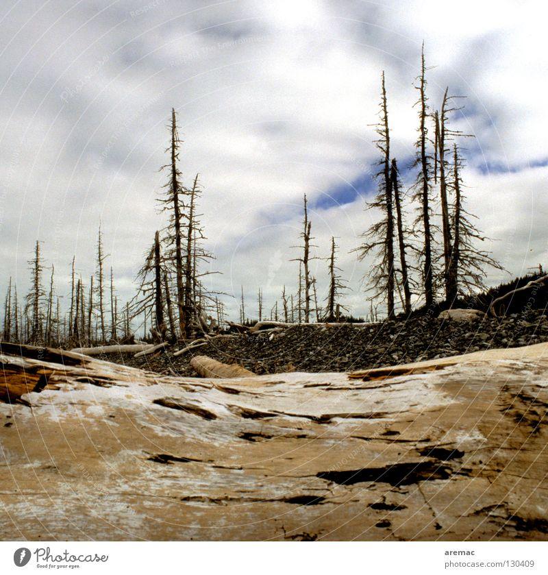 Zauberland ist abgebrannt Wald Baum Dürre Holz trocken Vergänglichkeit Brand Tod Landschaft Natur getrocknet brennen