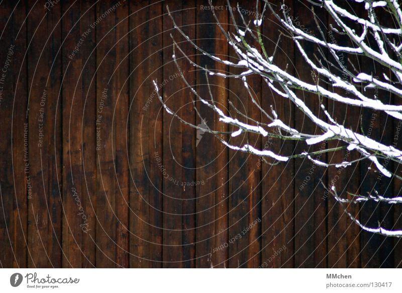 Vor der Bretterwand Holz Holzwand Schnee Langeweile vertikal Winter Holzhütte Holzhaus Hütte braun weiß Holzbrett Ast Zweig Holzwurm Brett vorm Kopf