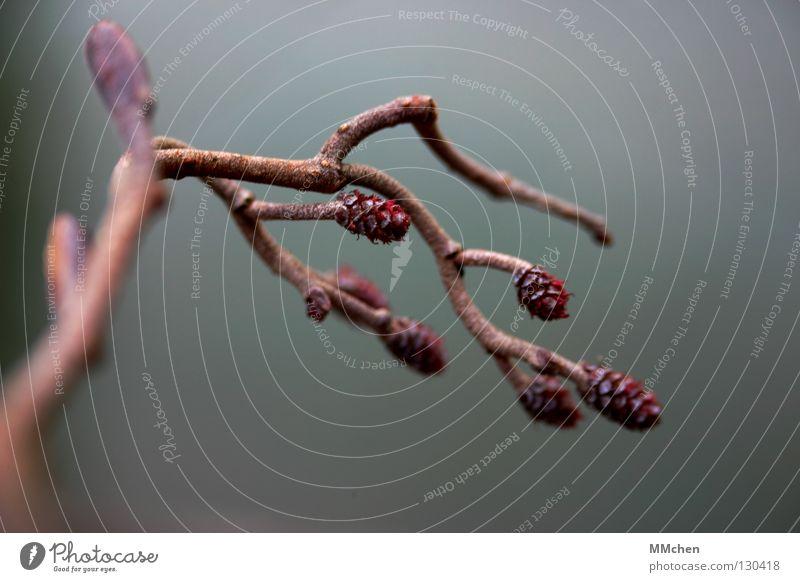 Kraft tanken Winter Herbst Frühling Park braun Ast Zweig Rest vertrocknet getrocknet herbstlich