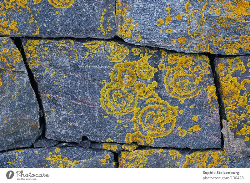 Geflecht 2 Mauer Muster Ornament Naturwuchs grau gelb Pflanze Stein Mineralien Flechten