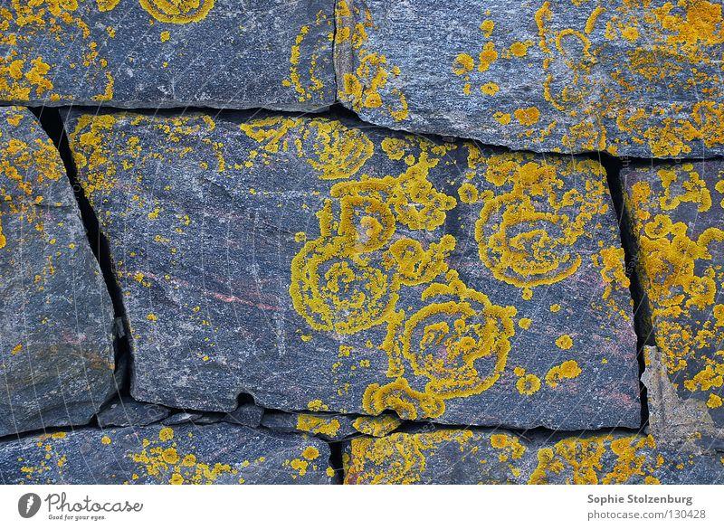 Geflecht 2 Natur Pflanze gelb grau Stein Mauer Ornament Mineralien Pilz Flechten Naturwuchs