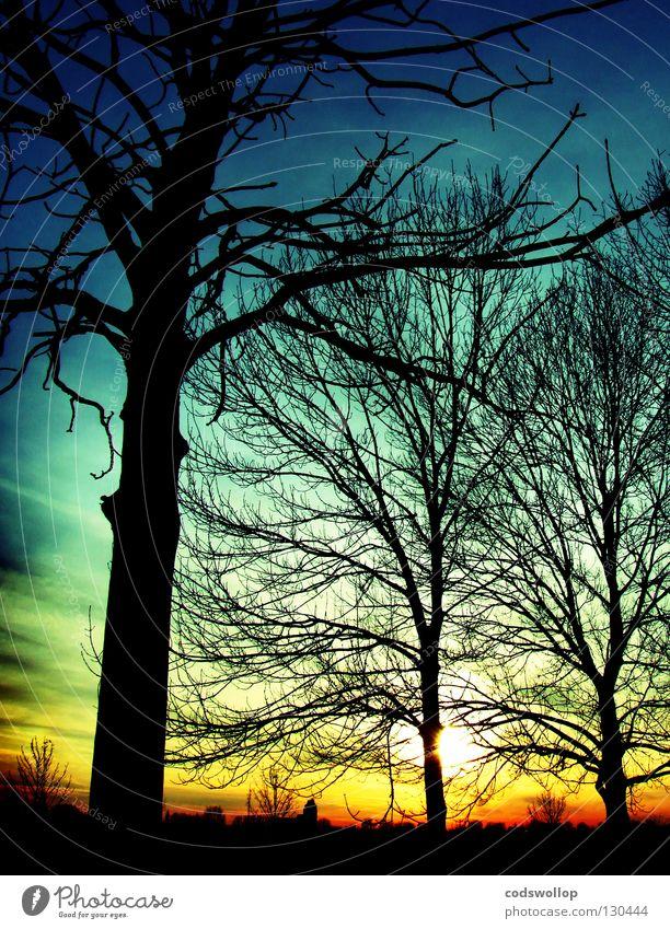 outside the box Himmel Natur Sonne Winter Horizont Skyline Elbe Himmelskörper & Weltall