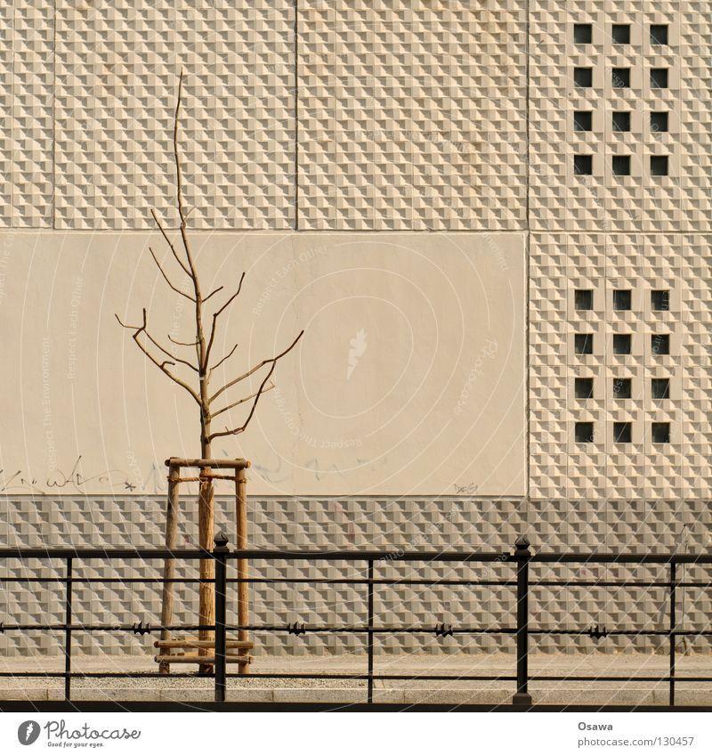 füttern verboten weiß Baum Stadt Pflanze Haus Berlin Wand grau Mauer Gebäude Beton Trauer Ast Mitte Verzweiflung