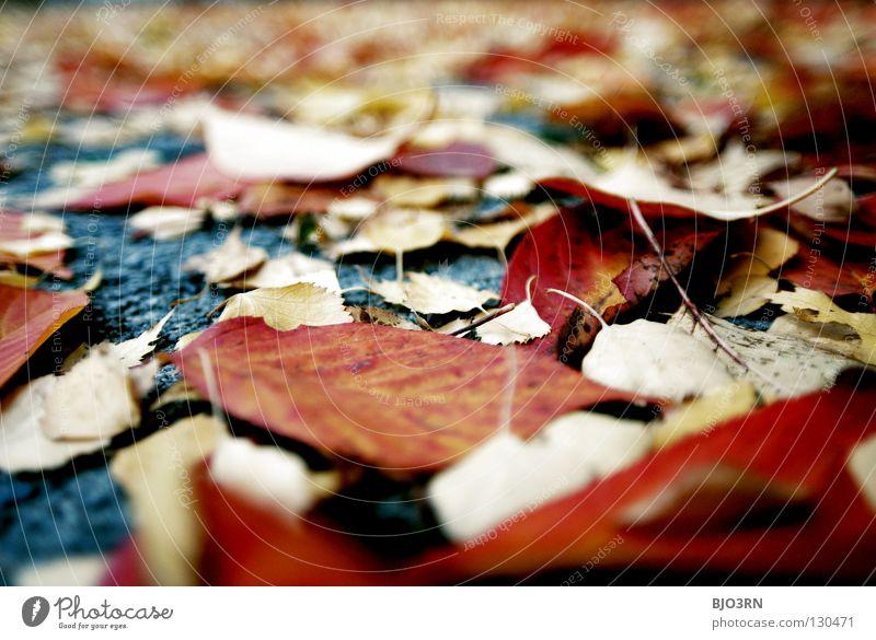 street art #2 Herbst Blatt mehrfarbig durcheinander Asphalt Mischung mehrere rot gelb grau Hochformat vertikal ruhig Pause unten autumn fallen Bodenbelag ground