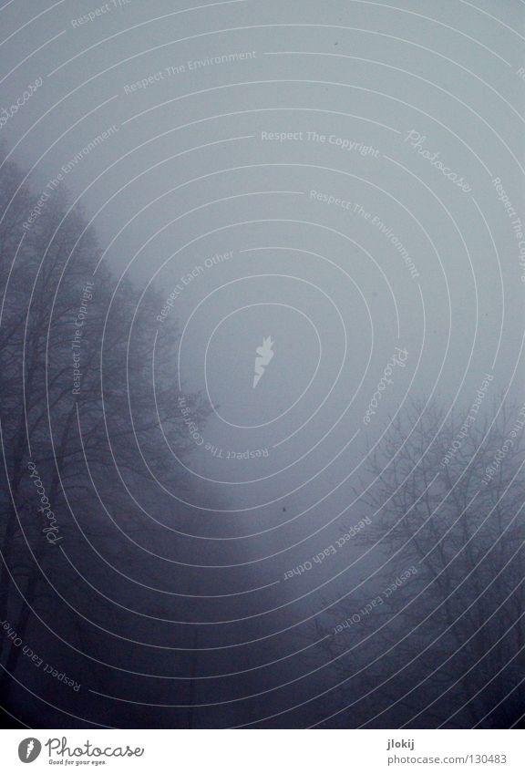 Nebelwald II dunkel Ferien & Urlaub & Reisen kalt Wolken Himmel rieseln Gegend Jahreszeiten Winter Baum Wachstum Pflanze Eis Nieselregen Berge u. Gebirge Alpen