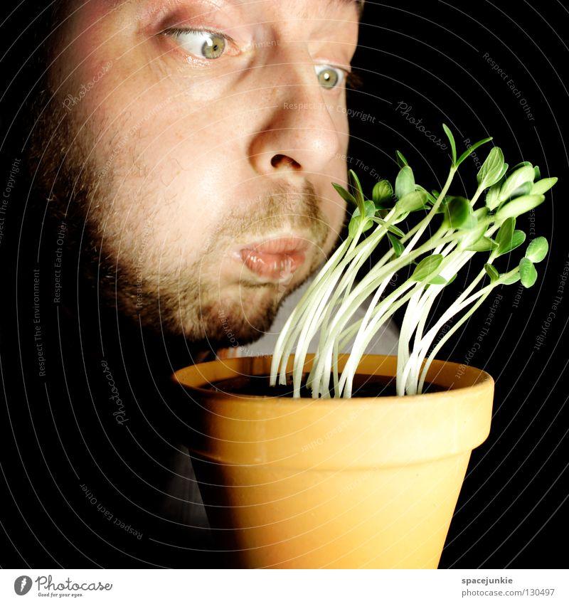 Tornado Sturm Unwetter Leidenschaft unfreundlich ungemütlich Gartenarbeit Reifezeit Topf keimen Saatgut Freude Wind Wetter Wachstum aufkeimen Keim Samen Gemüse