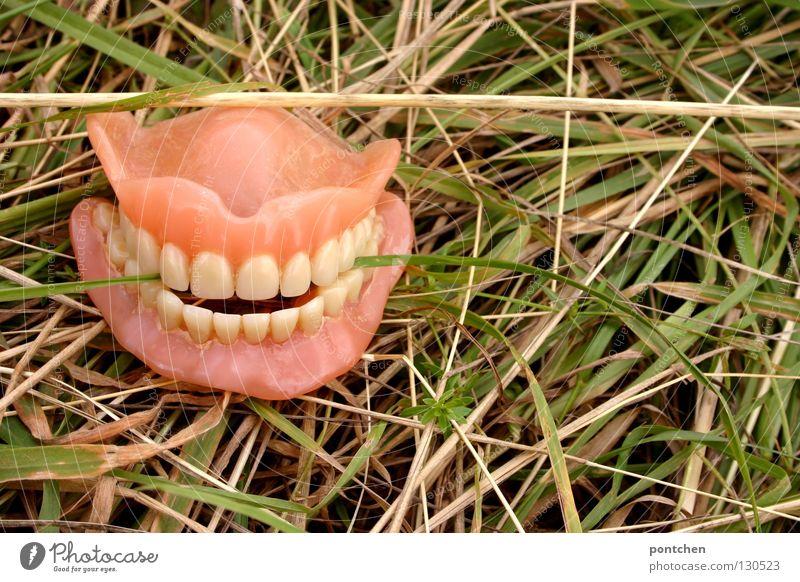 Gebiss im Gras. Grashalm zwischen Zähnen Kunststoff alt Lächeln hässlich lustig verrückt trashig Reinheit Tod Zukunftsangst bizarr Ende Endzeitstimmung skurril