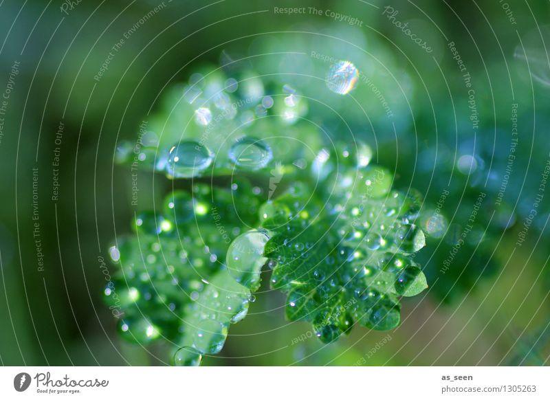 Frisches Glitzern Lifestyle schön Gesundheit Wellness Leben harmonisch Kur Spa Sommer Umwelt Natur Pflanze Wasser Wassertropfen Frühling Regen Blatt Grünpflanze