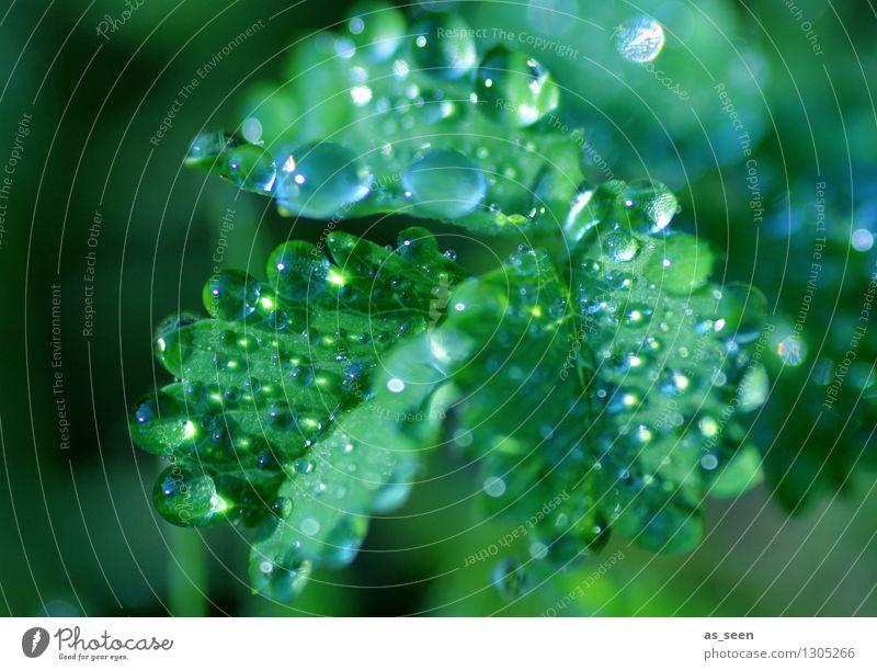 Tautropfen Erfrischungsgetränk Trinkwasser Design exotisch Gesundheit Wellness Leben harmonisch Sinnesorgane Kur Spa Sommer Garten Natur Pflanze Urelemente