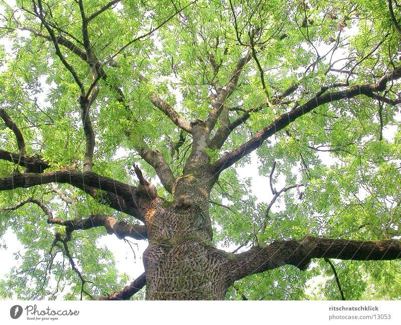 lebensraum Baum Blatt grün Ast